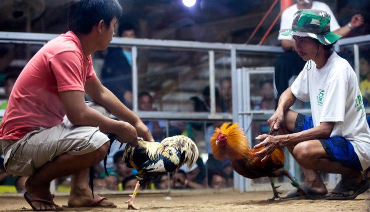 Jenis-Jenis Vitamin Untuk Ayam Aduan Terbaik